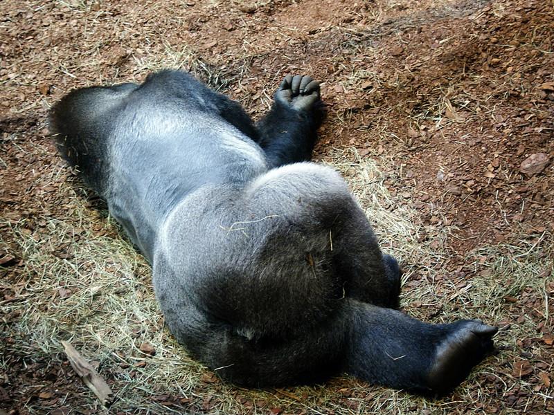 Caza de Gorilas