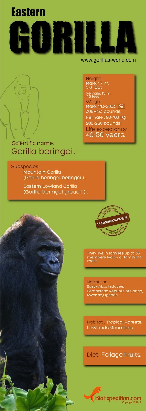 eastern_gorilla-copia1
