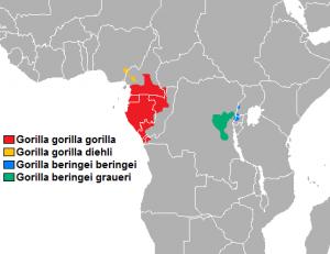 Home range gorilla subspecies.